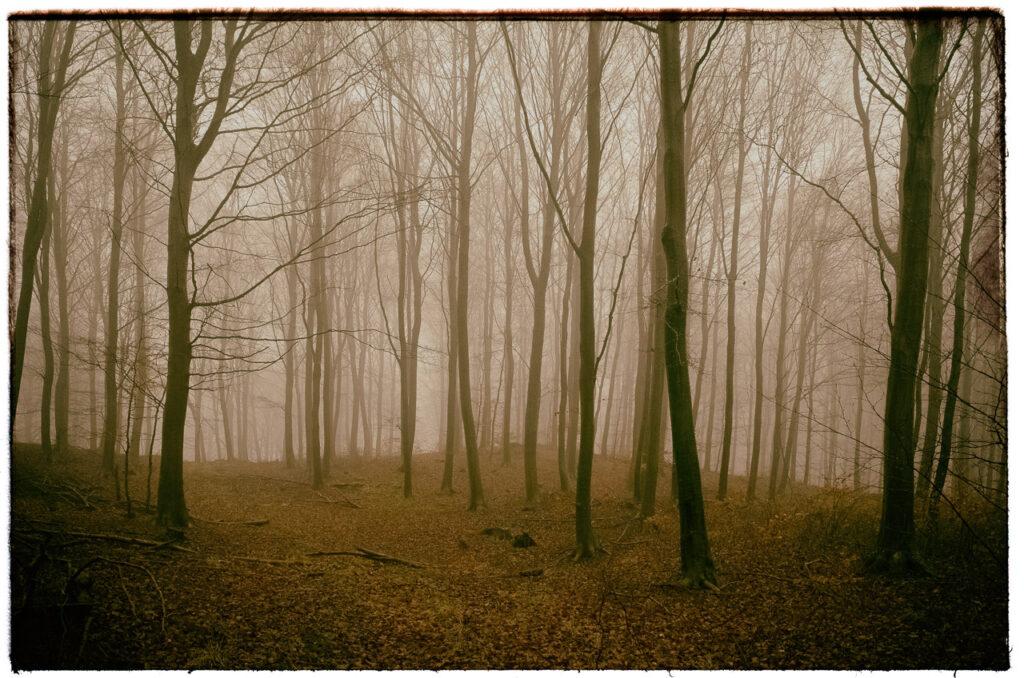 Wald ist Umweltschutz